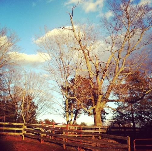 Virginia-Farm